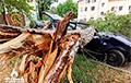 Ураган у Гомелі паваліў дрэвы і абарваў ЛЭП