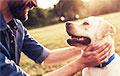 Ученые выяснили, когда древние собаки стали жить рядом с предками человека