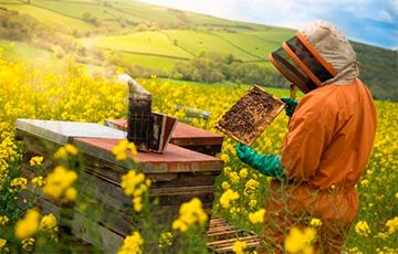 Таракан против меда