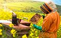 Таракан супраць мёду