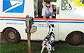 Видеохит: Собака самостоятельно забирает почту для своих хозяев