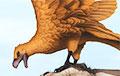 В Аргентине найдены гигантские хищные птицы
