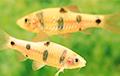 На Филиппинах нашли новый вид пещерных рыб