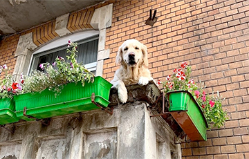 Пес на балконе в Гданьске стал популярной достопримечательностью