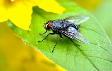 Ученые выяснили, как думают мухи