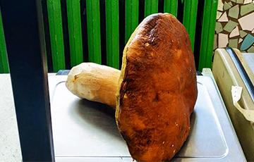 Под Старыми Дорогами нашли боровик весом больше килограмма