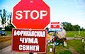 В Беларуси бушует африканская чума свиней?