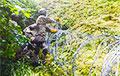 Літва пракладзе 100 кіламетраў калючага дроту на мяжы з Беларуссю
