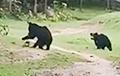 Играющие в футбол медведи стали звездами Сети