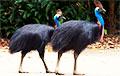 Ученые рассказали, как люди 18 тысяч лет назад пытались одомашнить птиц из Книги рекордов Гиннеса