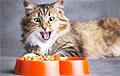 «Брать кошачий корм по рублю — это же разориться можно!»