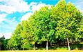 В Польше провели перепись деревьев