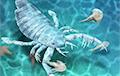В Китае ученые нашли крупного ракоскорпиона