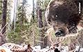 Американский фотограф запечатлел встречу голодного медведя гризли и камеры