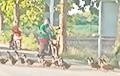 Сотни уток, которым не сиделось в поле, создали забавную пробку на дороге