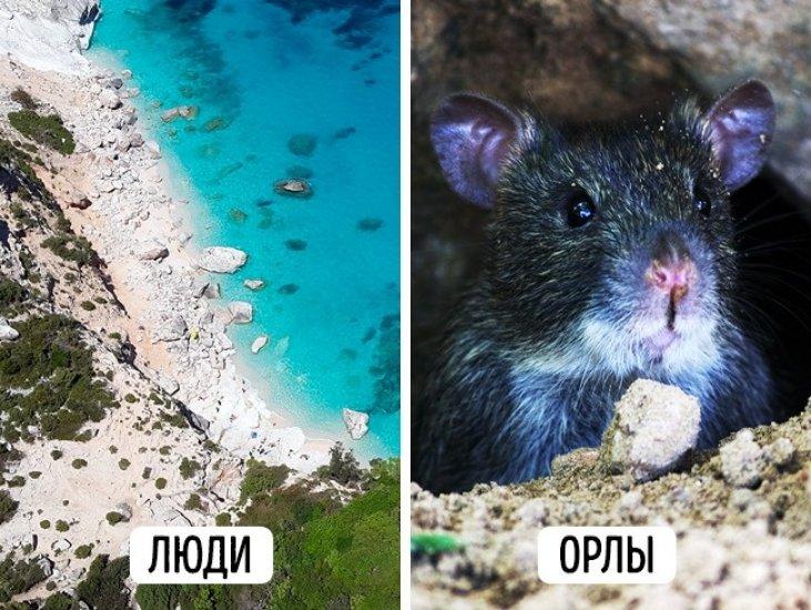 такого как видят животные фото некачественного