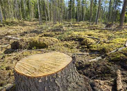 Ecologists demand to stop deforestation at Prypyatski national park