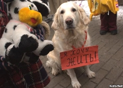 Волонтеры собирают подписи за принятие закона «О защите животных»