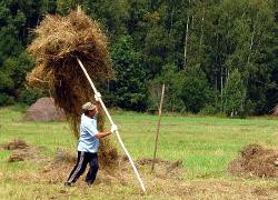 Workers receive hay instead of money in Krychau district