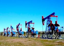 Цена нефти Brent демонстрирует самое продолжительное снижение в истории