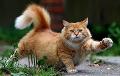 Ученые рассказали, сколько минут нужно гладить кота для снижения стресса