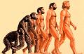 Как и почему лицо человека менялось в ходе эволюции