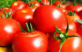 Rosselkhoznadzor: Tomatoes from Belarus Are Infected with a Mustached Insect