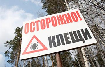 У Беларусі наплыў кляшчоў, а набораў для іх ліквідацыі ў аптэках няма