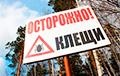 В Беларуси нашествие клещей
