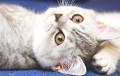 Исследователи рассказали, какая музыка успокаивает кошек