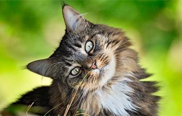 Ученые раскрыли интереснейшую загадку кошек