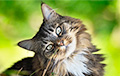 Рацион древних кошек показал, почему они решили жить с человеком