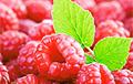 Названы пять лучших летних фруктов и ягод для похудения