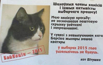 "Cat Vitushka from Vitsebsk calls to boycott ""elections"""