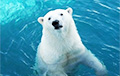 Ученые установили, почему некоторые виды животных уходят с суши обратно в океан