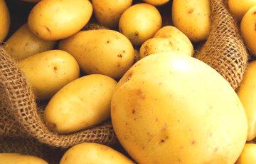 В Сморгони выкопали картофелину весом в целый килограмм