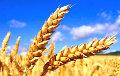 Россия может потерять более 20% урожая озимой пшеницы
