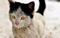 Відэахіт: Гаворачая котка стала зоркай Сеціва