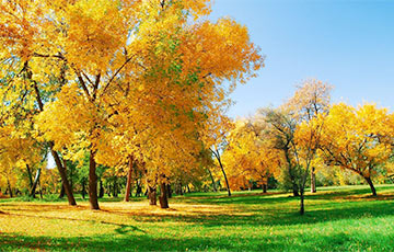 Сегодня в Беларуси ожидается до 12 градусов тепла