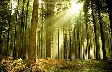 Экологи: Новый Лесной кодекс оставит белорусов без леса