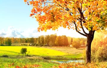 Бабье лето в Беларуси продлится до 22 октября