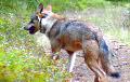 Под Гомелем дикие собаки терроризируют деревню