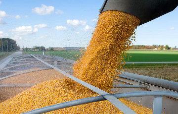 Цены на пшеницу в России взлетели до рекорда на фоне девальвации рубля