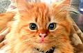 Ученые объяснили, почему кошек нельзя оставлять дома одних