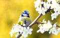 Синоптики: Весна окажется значительно теплее, чем обычно