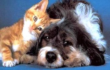 В Беларуси хотят изменить правила содержания домашних животных