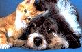 Собаки и кошки в ЕС получат дополнительную защиту