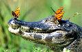 Ученые рассказали о самом большом крокодиле в мире