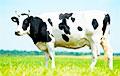 Генетики назвали родину всех современных коров и быков