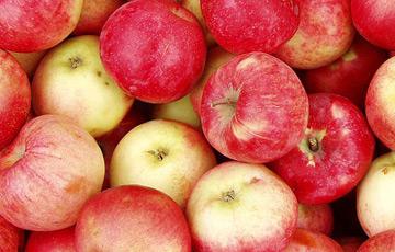 В США вывели сорт яблок, которые можно хранить в холодильнике год